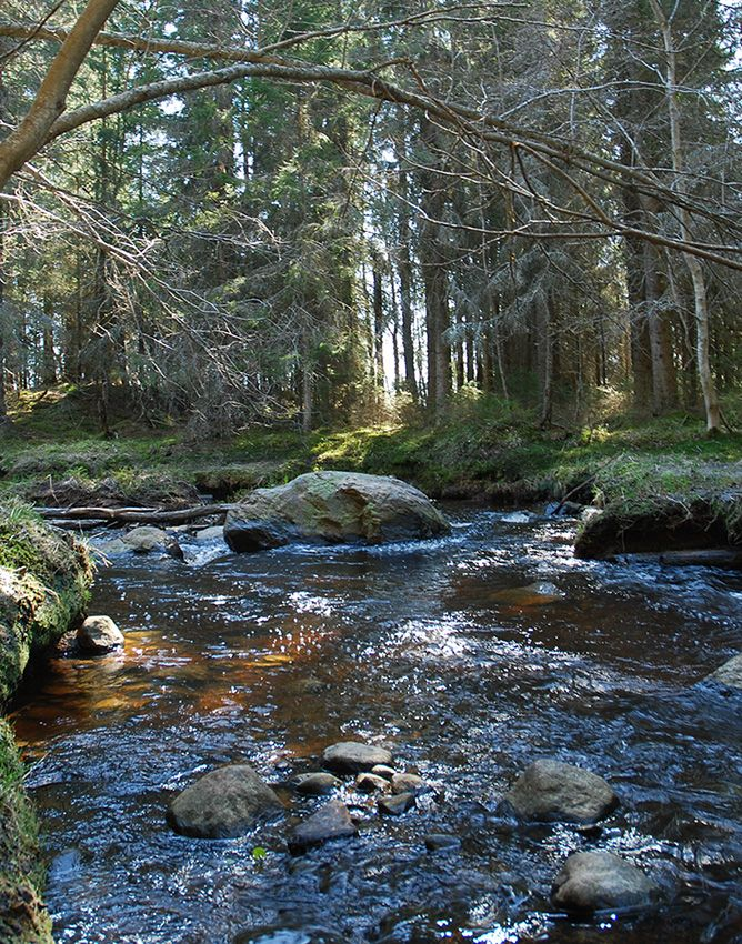 Strömbäck-Kont naturreservat vandrarhem