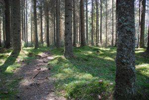 Naturreservat utanför Umeå vandrarhem
