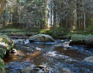 Naturreservat Strömbäcks